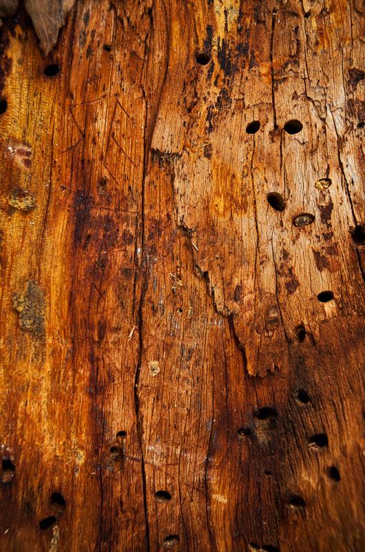 big-tree-la-pine-29-1