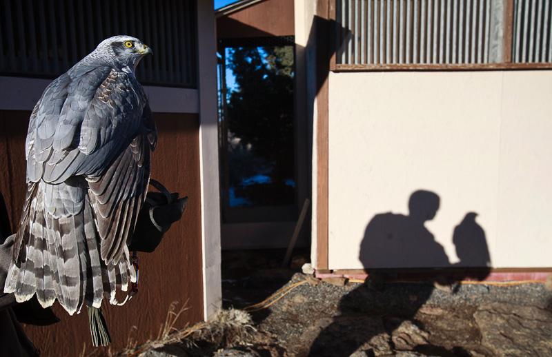 falconer08