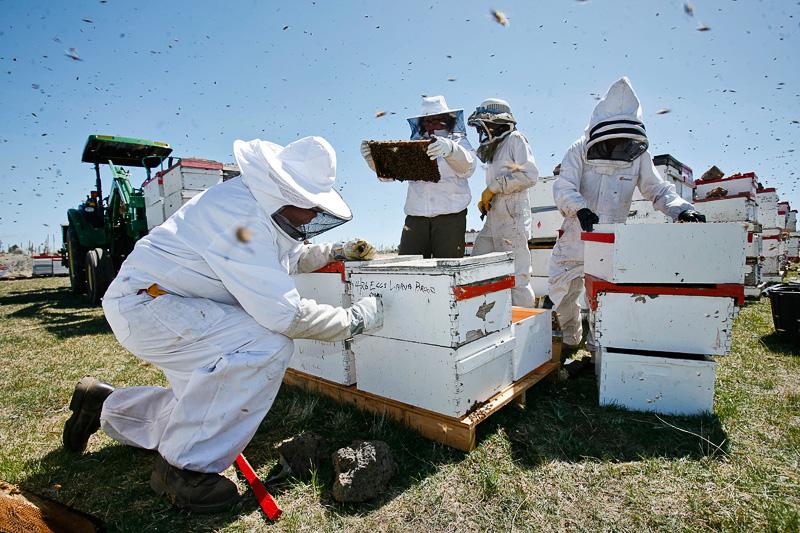 beekeeping-34-2