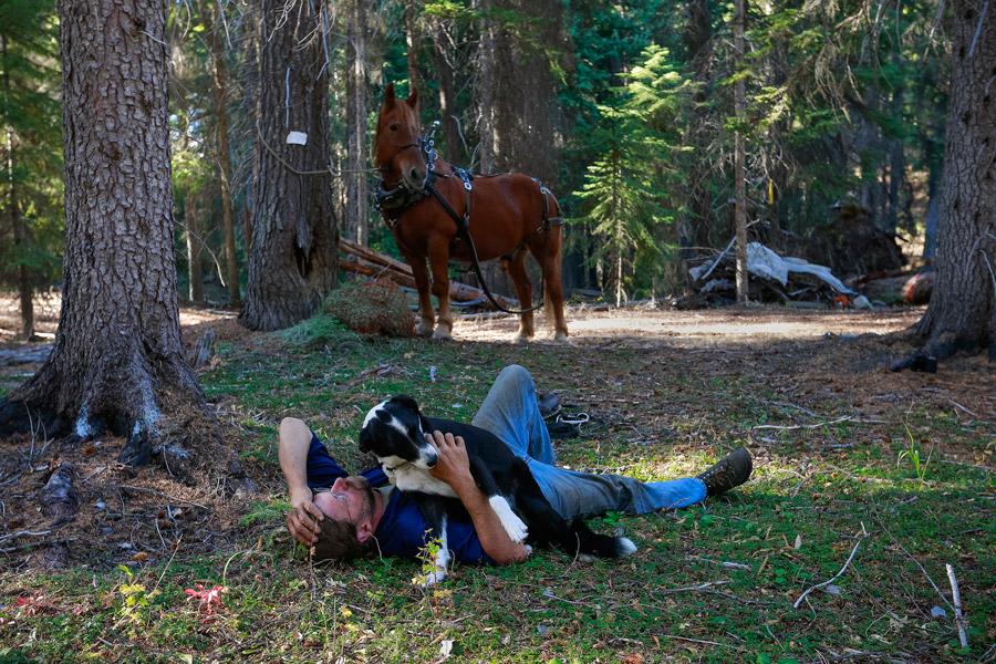 2014_10_horselogger