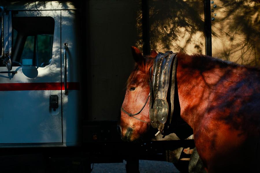 2014_11_horselogger100